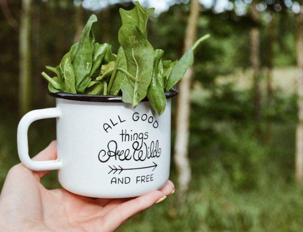 jak nauczyć dziecko być eko