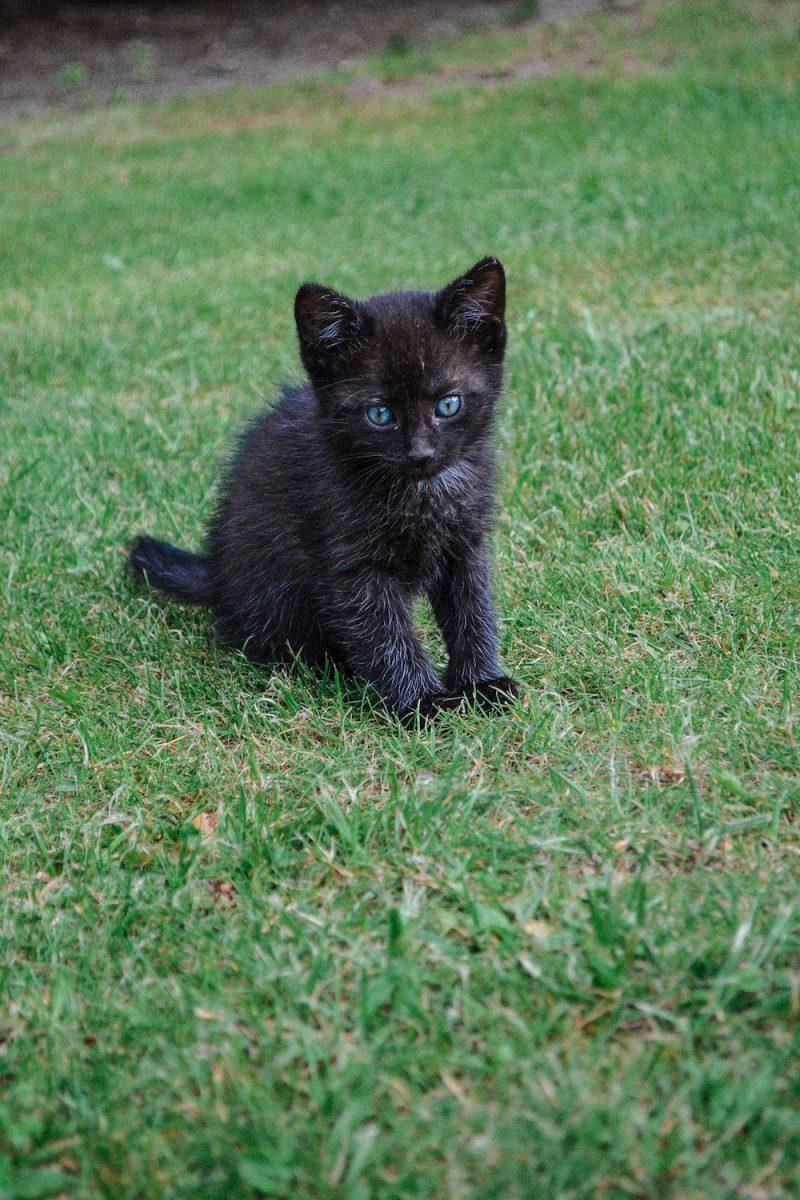 mały czarny kot